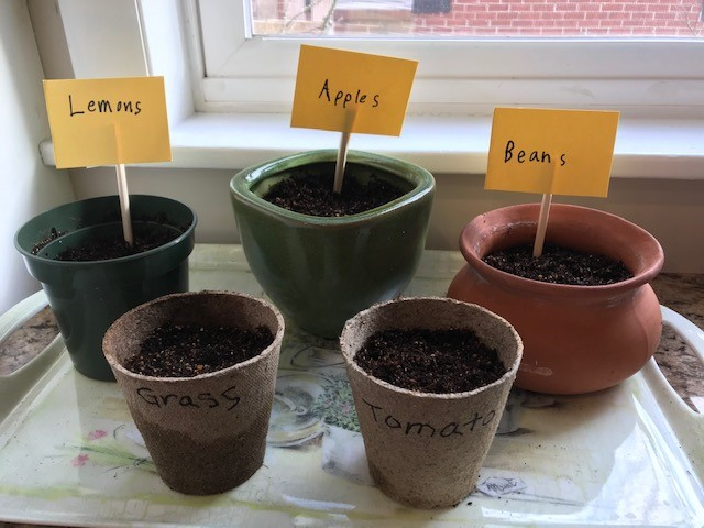 Sanity Savers: Planting Seeds from the Fruit you Eat