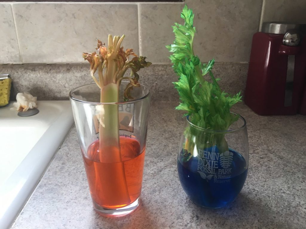 Sanity Savers: Coloful Celery